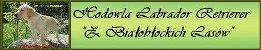 Hodowla LABRADOR RETRIEVER